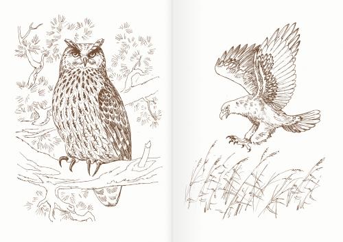 Альбом для раскрашивания. |Часть 13. Птицы