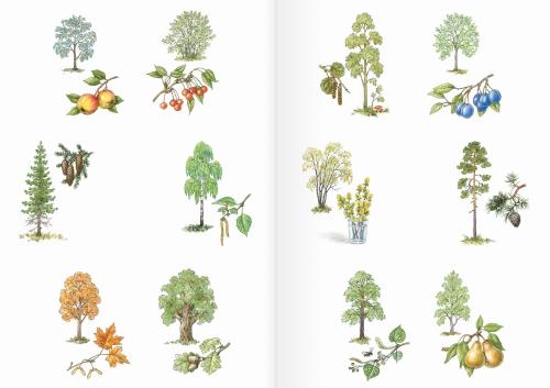 Альбом для раскрашивания. |Часть 20. Деревья