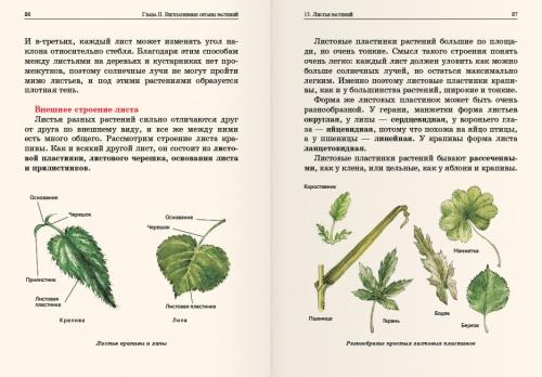 Ботаника для 5 класса