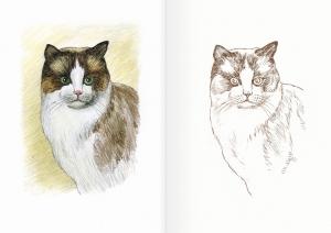Альбом для раскрашивания. |Часть 11. Кошки