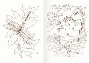 Альбом для раскрашивания. |Часть 15. Насекомые и паук