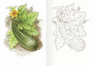 Альбом для раскрашивания. |Часть 17. Овощи и злаки