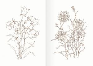 Альбом для раскрашивания. |Часть 18. Цветы