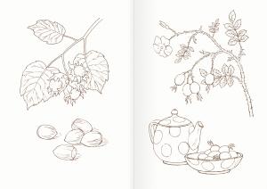 Альбом для раскрашивания. |Часть 19. Ягоды и плоды